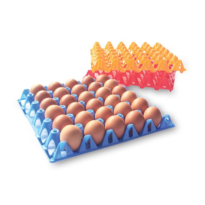 Fresh shell eggs